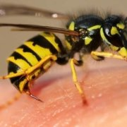 Allergia puntura di insetto